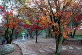 福壽山農場 - 2020:鴛鴦湖畔楓紅