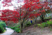 福壽山農場 - 2020:IMG_4831