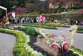 草山行館:2013陽明山花季