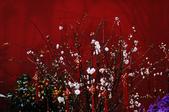 賀歲迎春 & 夢幻仙境:DSC_0936