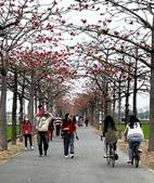 林初埤木棉花:2021年三月再訪