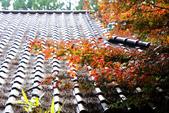 福壽山農場 - 2020:IMG_4790