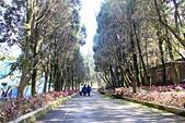 九族文化村:IMG_0997