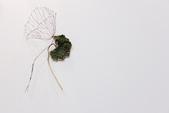 2013國際花藝設計大賽:IMG_1399