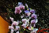 賀歲迎春 & 夢幻仙境:DSC_0901