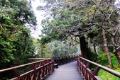 阿里山森林遊樂區:IMG_2347