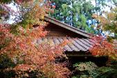 福壽山農場 - 2020:松廬楓紅