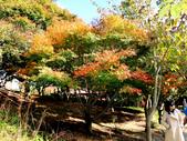 福壽山農場 - 2020:IMG_4821