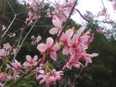 九族櫻花季:1095762307.jpg