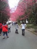 九族櫻花季:1095762325.jpg