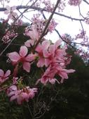 九族櫻花季:1095762306.jpg