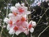 九族櫻花季:1095762308.jpg