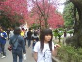 九族櫻花季:1095762321.jpg