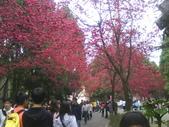 九族櫻花季:1095762322.jpg