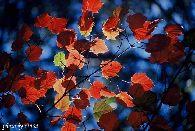 花卉植物:大自然的調色盤