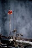 花卉植物:生命力