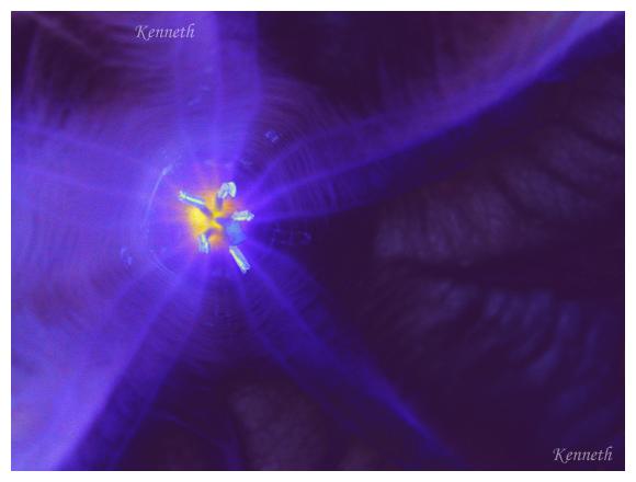 花卉植物:宇宙