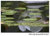 校園巡禮 - 成功大學:生態池一角