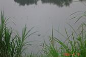 未分類相簿:青草湖 040.JPG