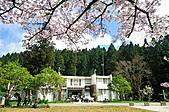 2011阿里山吉野櫻花:MIN_0003.JPG