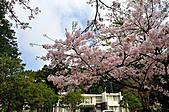 2011阿里山吉野櫻花:MIN_0018.JPG