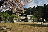 2011阿里山吉野櫻花:MIN_0028.JPG