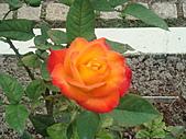 0430賞玫瑰:DSC00775