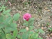 0430賞玫瑰:DSC00792