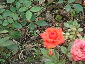 0430賞玫瑰:DSC00768