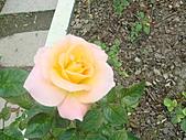 0430賞玫瑰:DSC00786