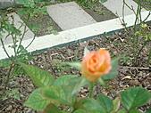 0430賞玫瑰:DSC00787