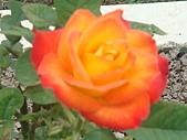 0430賞玫瑰:DSC00774