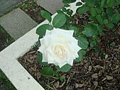 0430賞玫瑰:DSC00791
