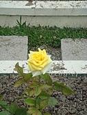 0430賞玫瑰:DSC00771