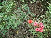 0430賞玫瑰:DSC00767