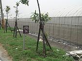 2009-05-29 朴子溪自行車道:CIMG7230_resize.JPG