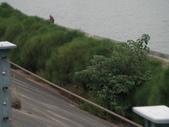 2009-05-29 朴子溪自行車道:CIMG7248_resize.JPG