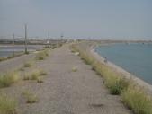 2009-05-29 朴子溪自行車道:CIMG7306_resize.JPG