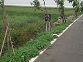 2009-05-29 朴子溪自行車道:CIMG7228_resize.JPG
