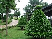 970530_台中新社莊園&薰衣草森林之旅:剪得很可愛的樹