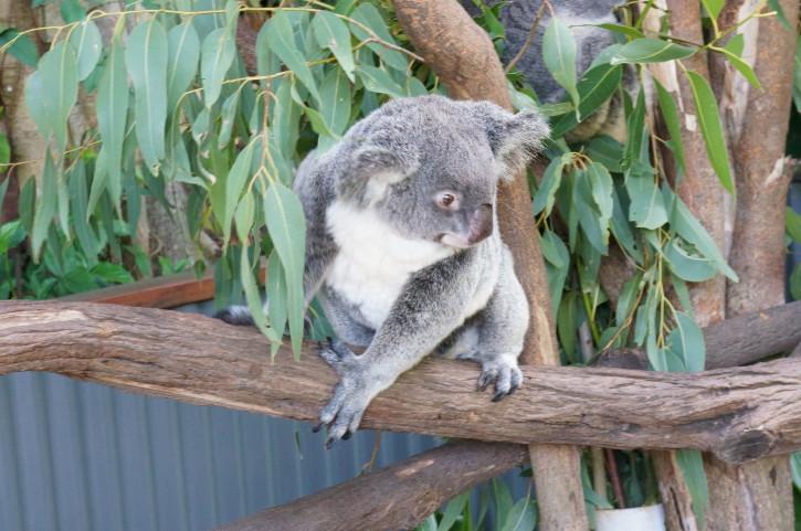 暢遊南半球──澳大利亞十日自駕之旅:暢遊南半球──澳大利亞十日自駕之旅13.jpg