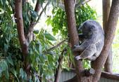 暢遊南半球──澳大利亞十日自駕之旅:暢遊南半球──澳大利亞十日自駕之旅11.jpg
