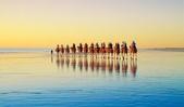 澳大利亞-凱布爾海灘(Cable Beach)日落時分的駱駝隊:澳大利亞-凱布爾海灘日落時分的駱駝隊2.jpg