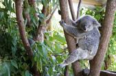 暢遊南半球──澳大利亞十日自駕之旅:暢遊南半球──澳大利亞十日自駕之旅12.jpg