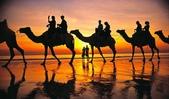 澳大利亞-凱布爾海灘(Cable Beach)日落時分的駱駝隊:澳大利亞-凱布爾海灘日落時分的駱駝隊5.jpg