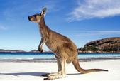 澳大利亞之袋鼠島經典兩日遊:澳大利亞之袋鼠島經典兩日遊3.jpg