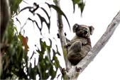 澳大利亞之袋鼠島經典兩日遊:澳大利亞之袋鼠島經典兩日遊5.jpg