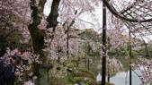 平安神宮:DSC01384.JPG