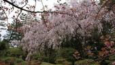 平安神宮:DSC01374.JPG