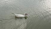 內湖:DSLR-A2001905.JPG